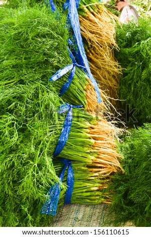 Bunches of green fresh coriander