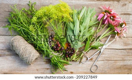 bunches of healing herbs, coneflowers, top view, herbal medicine