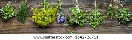 Bunches of herbs, fresh garden herb, long background