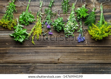 Bunches of herbs, freshly harvested herb from the garden