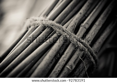 Bundle of bamboo stalks bind with a rope. Shallow dof.