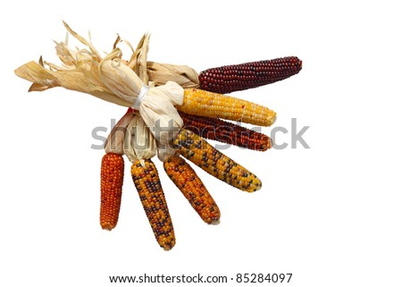Bundle of Indian corns isolated on white background