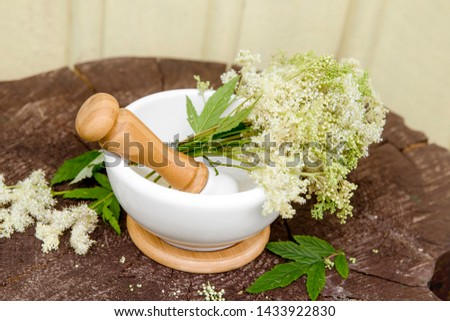 Bundle of Meadowsweet also referred to as queen of the meadow, pride of the meadow, meadow-wort, meadow queen, lady of the meadow, dollof, meadsweet, and bridewort in mortar with pestle. #1433922830