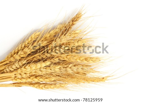 Bundle of Wheat isolated on white