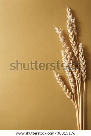 Bundle of wheat on gold background