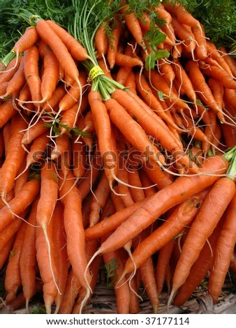 bundles of carrots - stock photo