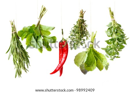 Bundles of fresh spices herbs handing over white background.