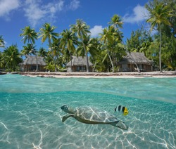 Bungalows and coconut trees on tropical coast with a turtle underwater, Tikehau atoll, Tuamotu, French Polynesia, Pacific ocean, split view over and under water surface