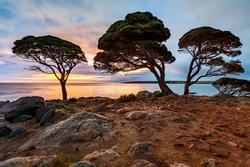 Bunker Bay Western Australia at sunrise