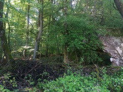 bunker of worldwar in the woods