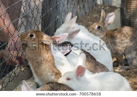 Bunnies area at pets' corner in Beer-Sheva Zoo. Israel #700578658