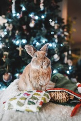 Bunnies Together on Christmas Day