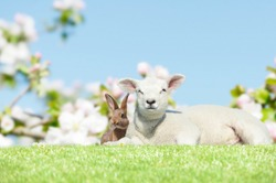 bunny and lamb on meadow in springtime