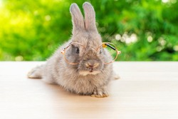 Bunny animal easter holiday concept. Lovely brown baby rabbit wearing eyeglasses sitting on the wood over green garden blurred background. Cuddly fur bunny with short eye sight.