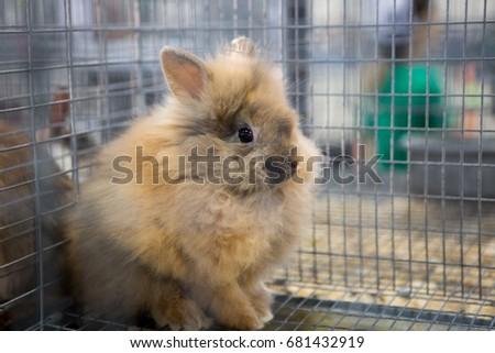 Bunny bunny #681432919