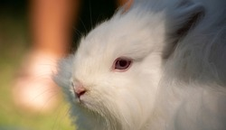Bunny gazing into the distance on a warm summer day