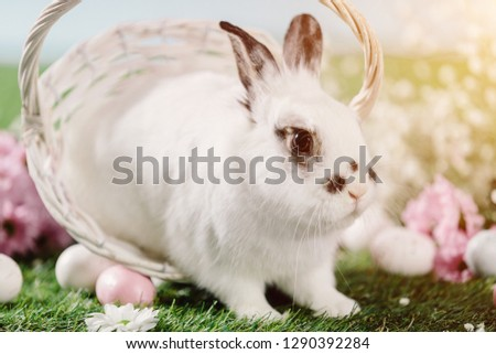 Bunny hopping out of Easter basket on the grass. Easter Christian traditions, spring holiday.