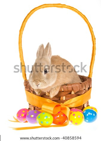 Bunny in Easter basket with colorful Easter eggs on white background
