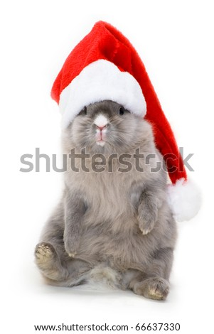Bunny in the red
