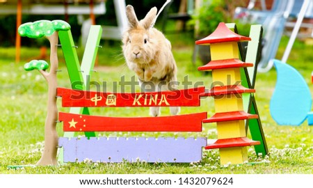 Bunny jumping over an asian themed obstacle in the back yard, training for the next competition