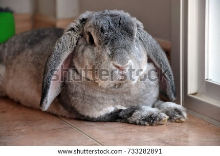 Bunny laying #733282891