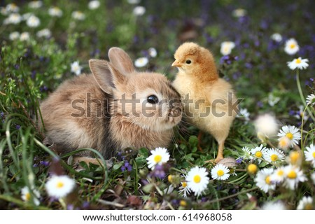 Bunny rabbit and chick are best friends #614968058
