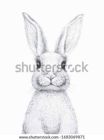 Bunny Rabbit. Easter Bunny. Pencil Draw. Nursery Wall Art. Kids Art Gift. Forest animal. White background