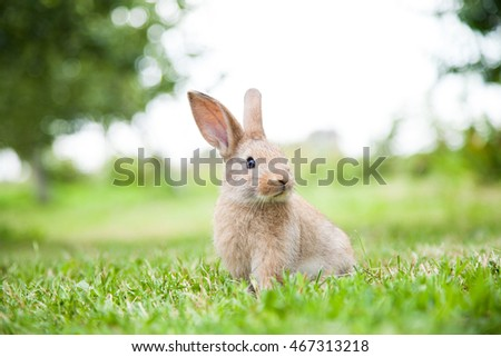 Bunny rabbit on the grass. Close up. #467313218