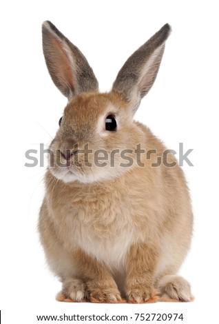 bunny rabbit sitting in front...
