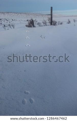 Bunny Tracks Winter