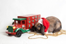 Bunny with Christmas decorations on white background