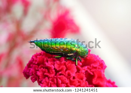 Beetle-in-water-drops Images and Stock Photos - Avopix com