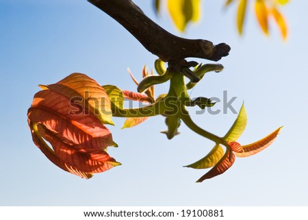 burgeons with green leaves on blue sky