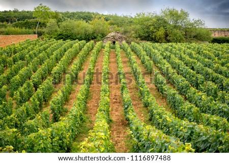 Burgundy, Vineyard and Cabottes. Near Pernand-Vergelesses. France.