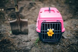 Burial of domestic pet illegal cemetery in forest. Sad tragic plot of animal death. Deceased kitten is wrapped in opaque bag in pet carrier, near favorite toy, portion food, preparing digging grave.