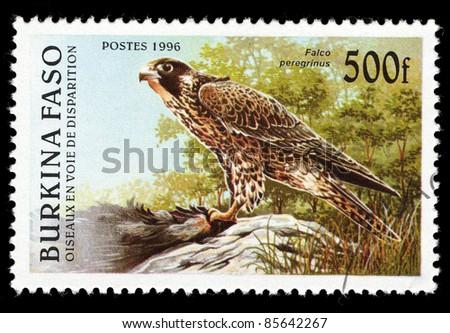 BURKINA FASO-CIRCA 1996: A stamp printed in Burkina Faso shows falco peregrinus, circa 1996