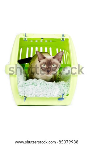 Burmese cat sitting in green bench isolated on white background