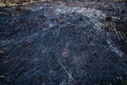 Burned black ashes on field after wildfire