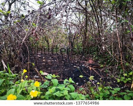Burned Bush, Bush Fire #1377654986