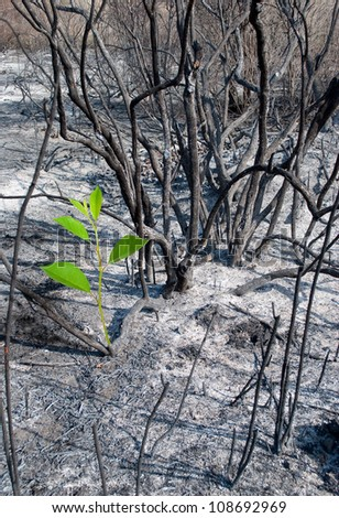 Burned-out forest and green sprout