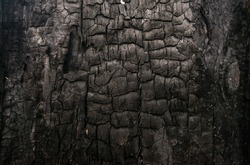 Burned wood texture. Black background