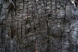 Burned wood texture. Black background, Details on the surface of charcoal, burnt wood texture, Grunge, burning fire, Dark material.