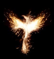 Burning bird phoenix isolated on black background