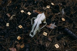 Burning candle and old scull in enchanted forest. Occult, esoteric concept.