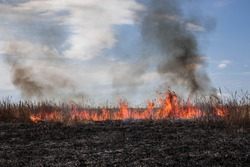Burning dry grass. Forest fire.Scorched earth. Bright flames of fire. Environmental disaster. Fire season.