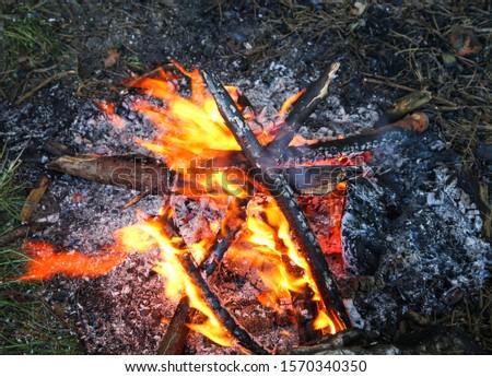 Burning flame in the forest. Burning bonfire. Burning firewood. #1570340350