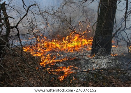 Burning forest - the natural disaster caused by an anthropogenous factor