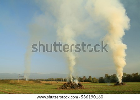 Burning of old orchard trees - Western Switzerland #536190160