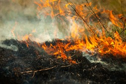 Burning old dry grass in garden. Flaming dry grass on a field. Forest fire. Stubble field is burned by farmer. Fire in the Field.