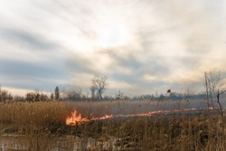 Burning reeds. Nature fire landscape. Devastation of wildlife, human influence on planet. Air pollution, hot and dry climate, environment, Earth saving concept